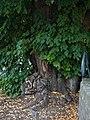 2020-07-18 Linde an der Wewelsburg, NRW 01.jpg