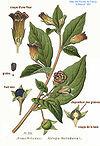 Medicina Natural Wikipedia La Enciclopedia Libre | Share