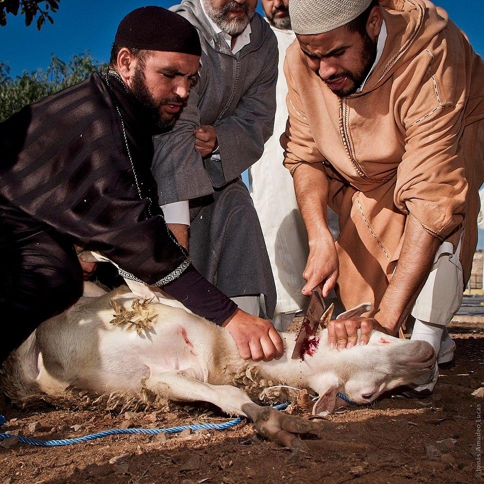 2 Animal sacrifice at Eid at Adha