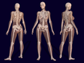 3D Female Skeleton Anatomy.png