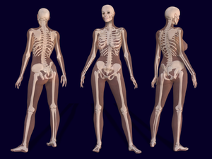 Pierre A. Riffard - « Female Skeleton Anatomy ». Bernhard Ungerer, 2008