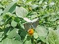 3 beautiful Butterfly.jpg