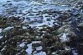 460, Iceland - panoramio (13).jpg