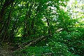 80-361-5008 Kyiv Golosiiv RLP SAM 0092.jpg