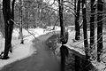 9067viki Park w Pszczynie . Foto Barbara Maliszewska.jpg