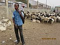 ASC Leiden - van de Bruinhorst Collection - Somaliland 2019 - 4653- Two men with sheep and goats. A cattle market at Hargeysa, Somaliland.jpg