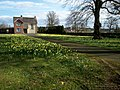 A Host of Daffodils - geograph.org.uk - 733821.jpg