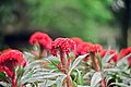 A Nice Red Flowers.jpg