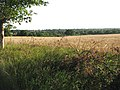 A field of ripening barley - geograph.org.uk - 1422629.jpg