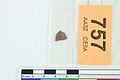 A fragment of silver pressblech foil from a helmet (FindID 554132).jpg