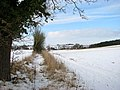 A snowy field boundary - geograph.org.uk - 1656839.jpg