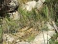 Abella de la Conca. La Torre d'Eroles. Font de la Torre 2.jpg