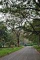 Acharya Jagadish Chandra Bose Indian Botanic Garden - Howrah 2011-02-20 1644.JPG