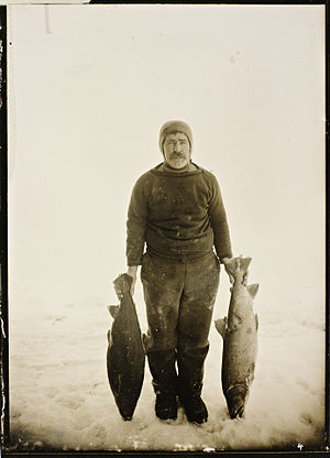 "Adolf Lindstrøm - ""Polar chef"" Adolf Lindstrøm with samples of fish on King William Island in 1904"