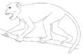 Aegyptopithecus ZICA.png