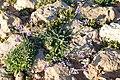 Akamas Peninsula, Cyprus - panoramio (7).jpg