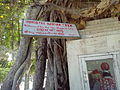 Akshay Vat, The Banyan Tree Witness to The Gita, Kurukshetra, India.jpg