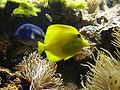Akvariet i Bergen15.jpg