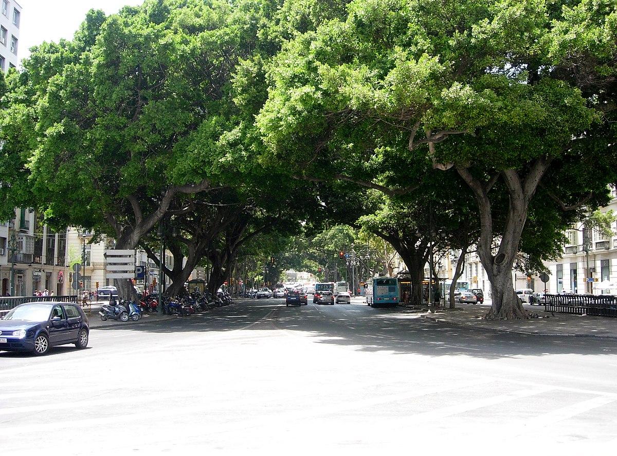 Paseo por la calle en brasil 28 - 3 9