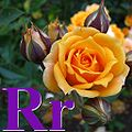 Alfabet roślin - literka R.jpg