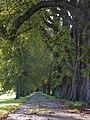 Alleeartige Zufahrt zum ehemaligen Schloss Ebersberg.jpg