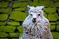 Alpaca By Diego Baravelli 05.jpg