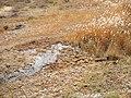 Alxa Zuoqi, Alxa, Inner Mongolia, China - panoramio (34).jpg