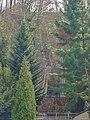 Am Wasserwerk Pirna 118711403.jpg
