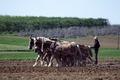 Amish farmer and his team of draft horses, Lancaster, Pennsylvania LCCN2011634221.tif
