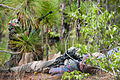 """An Indian Army soldier with the 99th Mountain Brigade approaches a role-playing insurgent """"killed"""" during bilateral training with paratroopers of the 82nd Airborne Division's 1st Brigade Combat Team.jpg"""