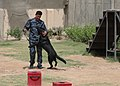An Iraqi Police K9 dog plays with his trainer in Basrah, Iraq, May 3, 2011 110503-A-YD132-150.jpg