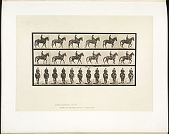 Animal locomotion. Plate 584 (Boston Public Library).jpg