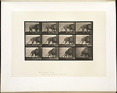 Animal locomotion. Plate 723 (Boston Public Library).jpg