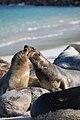 Animales en las islas Galápagos-Galapagos islands.jpg