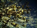 April Black Water Schwarzwaldwasser Cherry Blossom - Master Mythos Black Forest Photography 2013 - panoramio (2).jpg