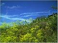 April Patina Vosges Die Vogesen France - Master Alsace magic Elsaß Photography 2014 Colors Montagne - panoramio.jpg