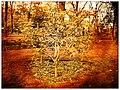 Arboretum Gaston Allard - Buisson ardent - panoramio.jpg