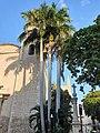 Arecales - Roystonea regia - 1.jpg