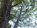 Arimine, Toyama, Toyama Prefecture 930-1458, Japan - panoramio (11).jpg