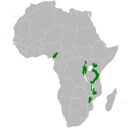 Arizelocichla distribution map.png
