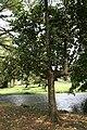 Artocarpus Heterophyllus 01.jpg