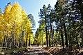 Aspen trees line FR418 (3972264452).jpg