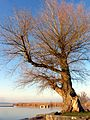 Auslikon - Strandbad 2011-12-27 15-21-18 (SX230).JPG