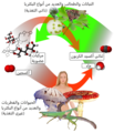 Auto-and heterotrophs-Ar.png
