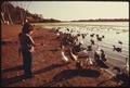 BUENA VISTA LAGOON, IS A WILDLIFE SANCTUARY. ONE OF THE LAST LAGOONS IN SOUTHERN CALIFORNIA, THERE IS CONCERN FOR THE... - NARA - 557490.tif