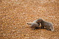 Baby Mongooses.jpg