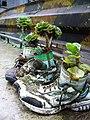 Banaue town (3294805780).jpg