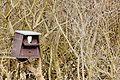 Barn Owl - RSPB Fowlmere (33530611375).jpg