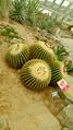 Barrel Cactus.png
