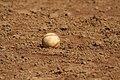 Baseball on dirt.jpg